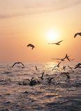 birds-sea-943470
