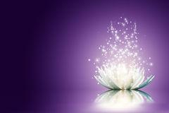 lotus eclatant