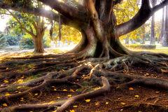 racines arbre