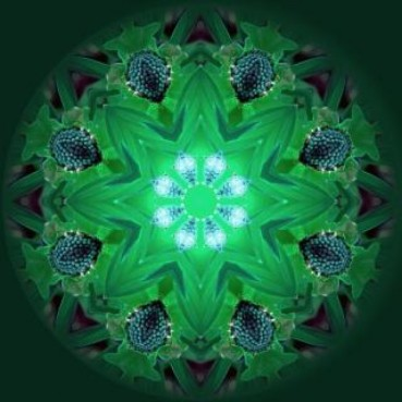 mandala-background--light_19-131109