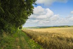 champs de cereales