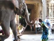 salut elephant