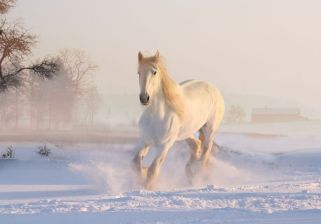 cheval blanc neige